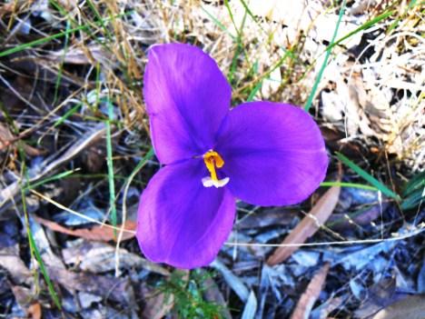 flowers-on-beehive-walk-straddie-3.jpg