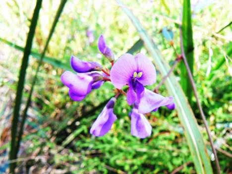 flowers-on-beehive-walk-straddie