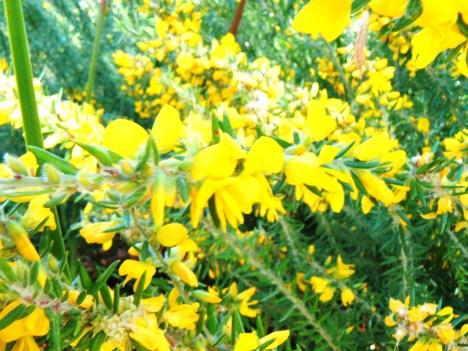 Beehive walk Straddie
