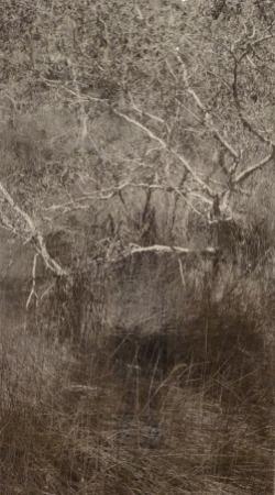 straddie swamp