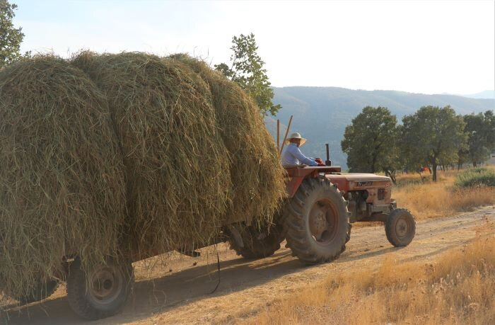 One of the men from Hezanke harvesting hay to feed the animals.